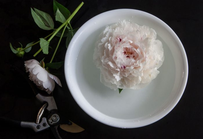 Peonies with clipper