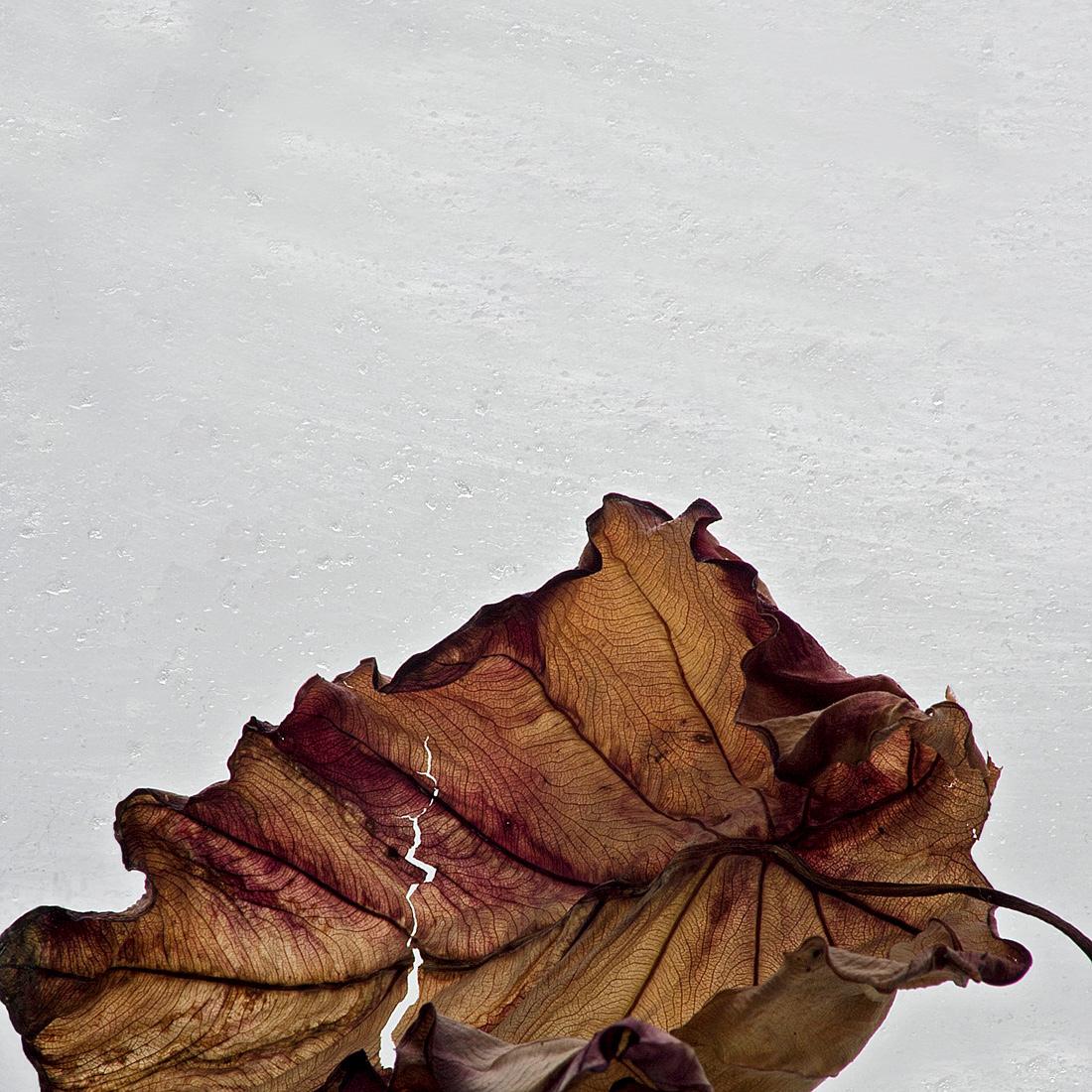 Botanical WW 036a, 2011