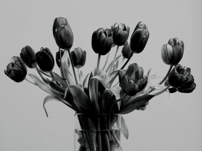 Tulip-Bunch-1BW-2017