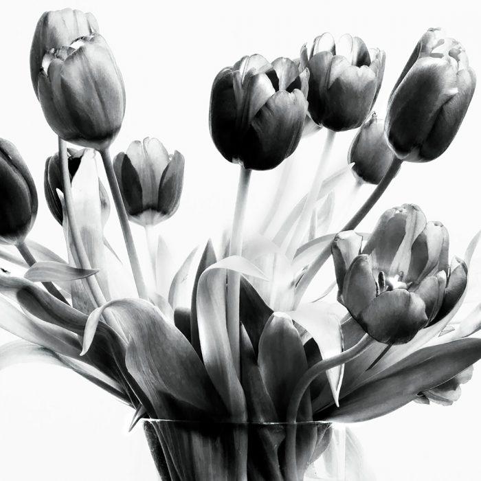 Botanicals-6-2017