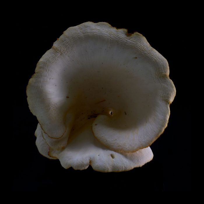 Mushroom 4, 2018