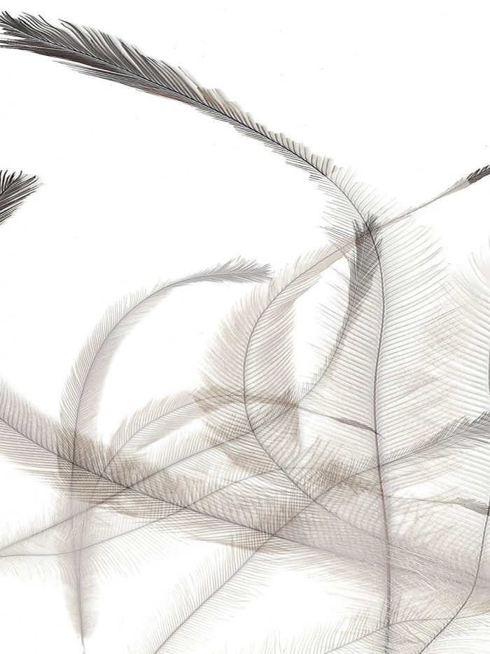 Feathers-6a-2014