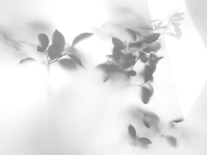Shadows-Lemontree-006-2012-17