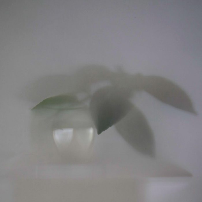 Shadows-Lemontree-010-2012-17