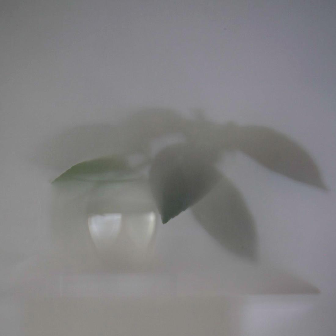 Shadows-Lemontree-010-2012-17
