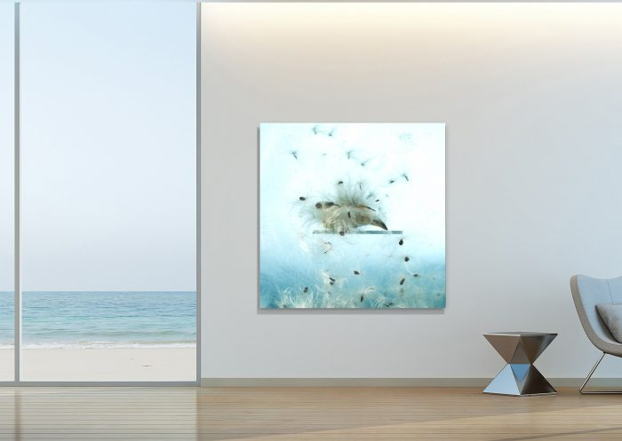 milkweed photograph